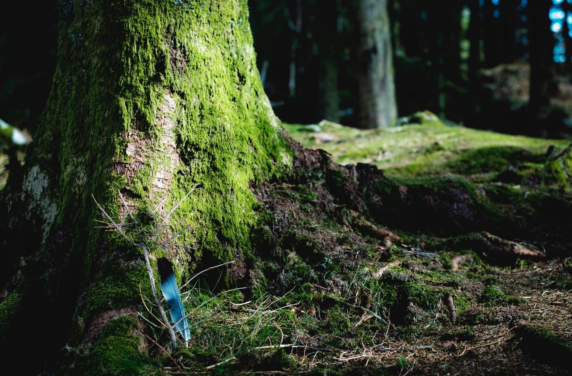 Investigadores del I3A darán apoyo al sector agrario y forestal para mejorar sus capacidades en la producción de energía basada en biomasa