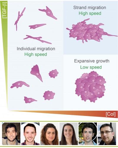 Un estudio realizado por investigadores del I3A muestra cómo se mueven las células tumorales y se favorece la metástasis